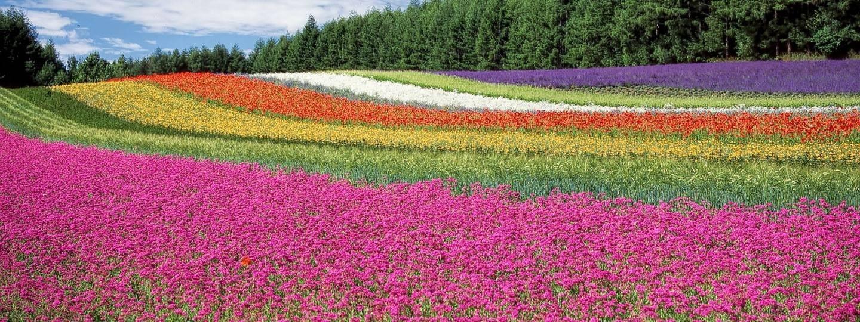 Campo con flores